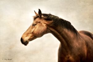 A SINISTER SCHEME ~ AIR SHIPPING LIVE DRAFT HORSES TO SLAUGHTER