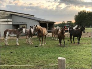 Spirit's Whisper Ranch