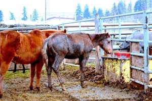 Valley-Auction-2015-600x400-1-300x200