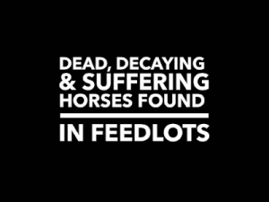 Dead, Decaying, Suffering Horses Found in Feedlot
