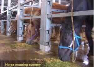 Five Horse Deaths Occur in Quarantine
