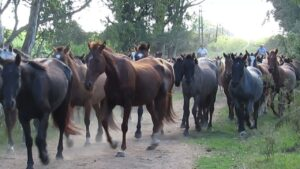 End Horse Blood Farms: Stop importation of ECG serum to Canada